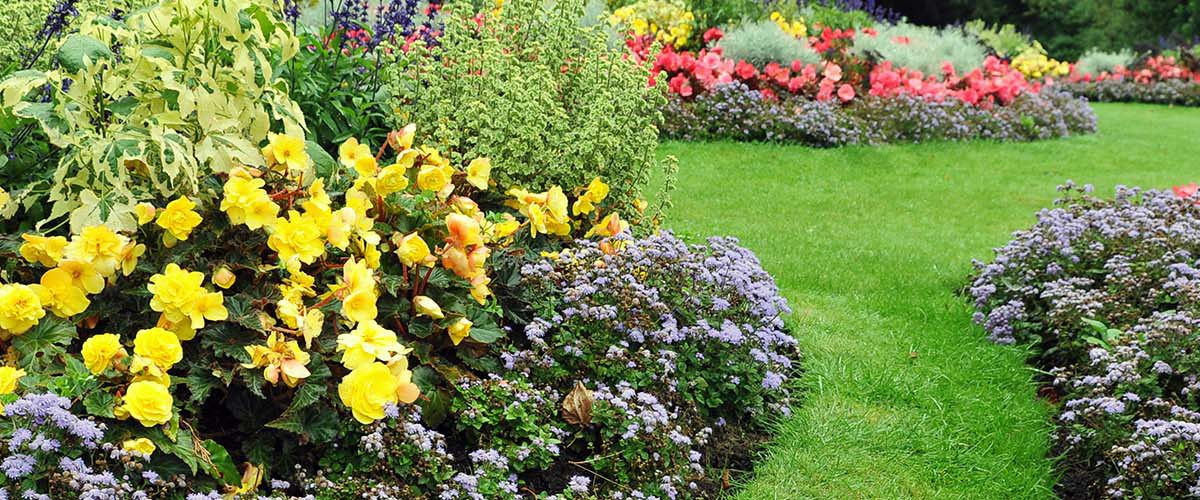 Landscape Construction and maintenance